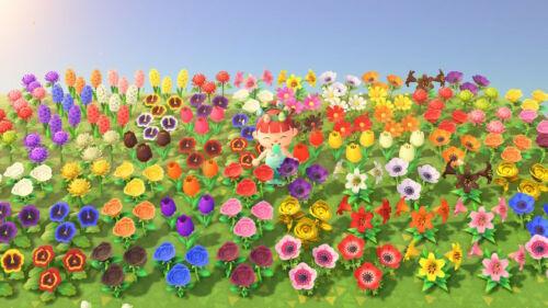 Animal Crossing New Horizons ALL FLOWER PLANT Rose Cosmo Tulip Pansy Hyacinth Lliy Mum Windflower 20