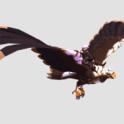 Crystal Battle Eagle (Tier 8) Any city