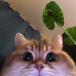 Lolik - avatar