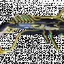 [PC/Steam] Pyrana prime set (MR 13) // Fast delivery! - image
