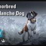 Anthorbred Avalanche Dog [NA-PC] - image