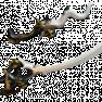 [PC/Steam] Nami skyla Prime Set (MR 11) // Fast delivery! - image
